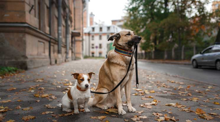 Dog holding leash with other dog